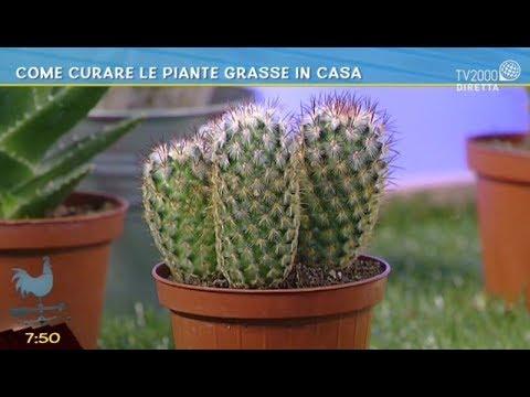 come curare le piante grasse in casa