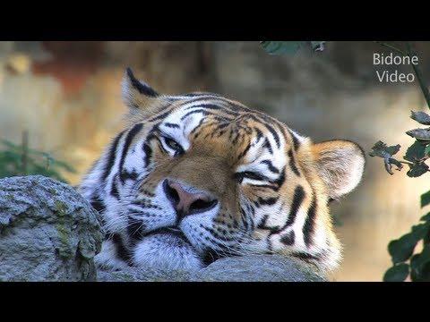 סרט טבע – גן החיות של לייפציג (5)