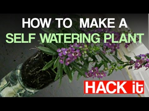 Brilliant: How to Make a Self-Watering Plant!