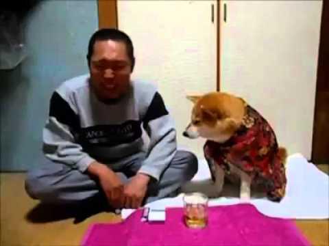 anti alcohol - Menudo compañero fiel este perro que se preocupa de su dueño hasta el punto de no dejarle probar una gota de alcohol... que luego se pone muy tonto. by ALCAC...
