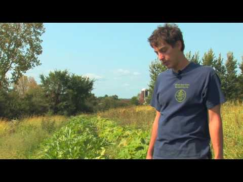 Vegetable Gardening : How to Grow Summer Squash