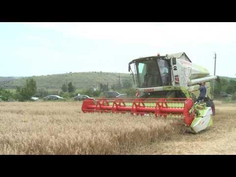 """Președintele Igor Dodon a vizitat întreprinderea agricolă """"Avito-Lux"""" din Găgăuzia"""