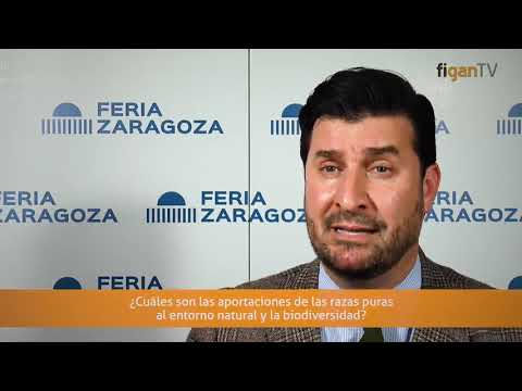 Interview with Manuel Luque from FEAGAS in Figan 2