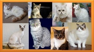 Cute Kitten Breeds Part 1