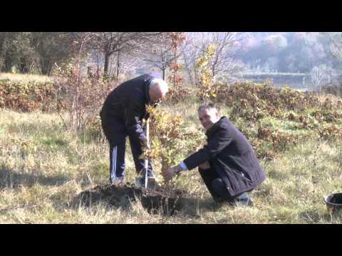 В Национальный день озеленения края президент Тимофти посадил деревья