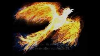 Myth of The Phoenix