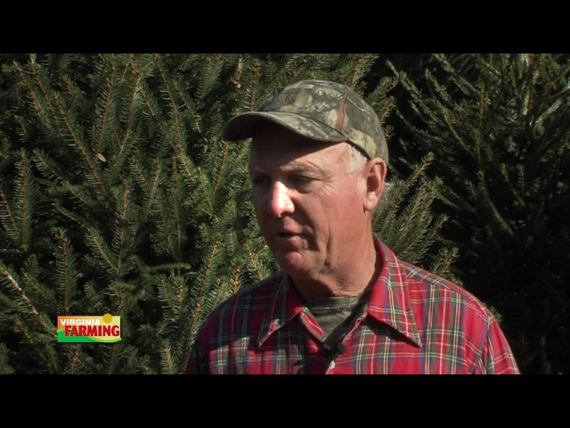 Virginia Farming: Virginia Christmas Trees (December 2016)