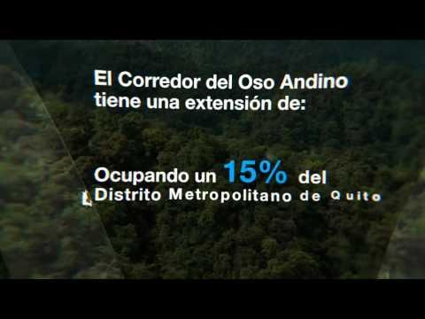 Corredor Ecológico del Oso Andino