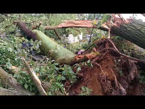 Wideo1: Powalone drzewa na cmentarzu w Strzyżewicach