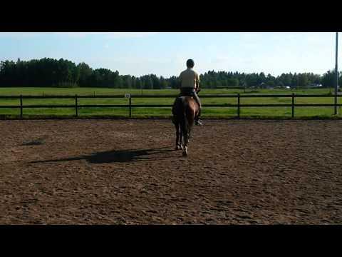 Tippy 140724 2 (видео)