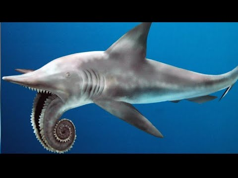 13 Terrifying Sharks That Actually Exist