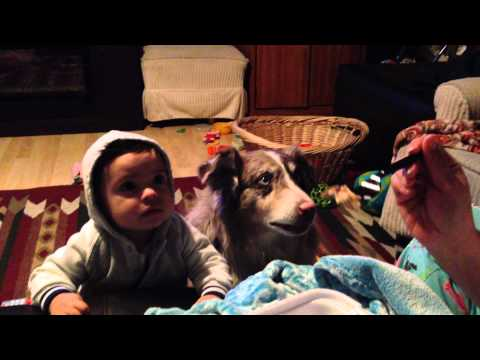 VIDEO: What Did That Dog Say?!