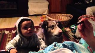 Pes umí říkat Máma