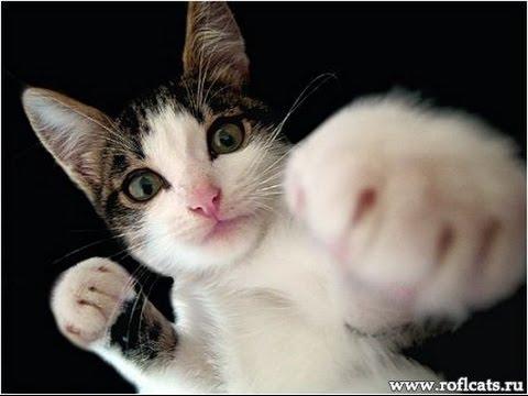 Смешные коты и кошки. Прикольные видео #7 / 2015 (видео)