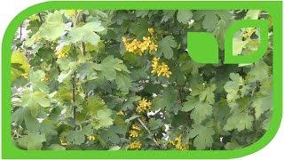 Fourberry Breeding