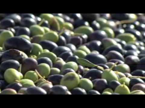 olive oil - http://www.theolivepress.com/ THE OLIVE PRESS in Sonoma is the #1 Award-winning Extra Virgin Olive Oil producer in California. Watch how we make it! You can ...