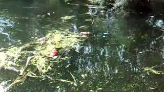 Экологическая катастрофа в Ливнах