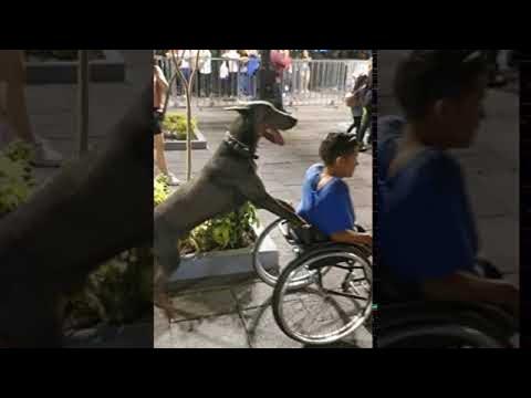 Σκύλος ... πρώτων βοηθειών