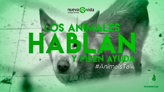 Animals Talk programa 1