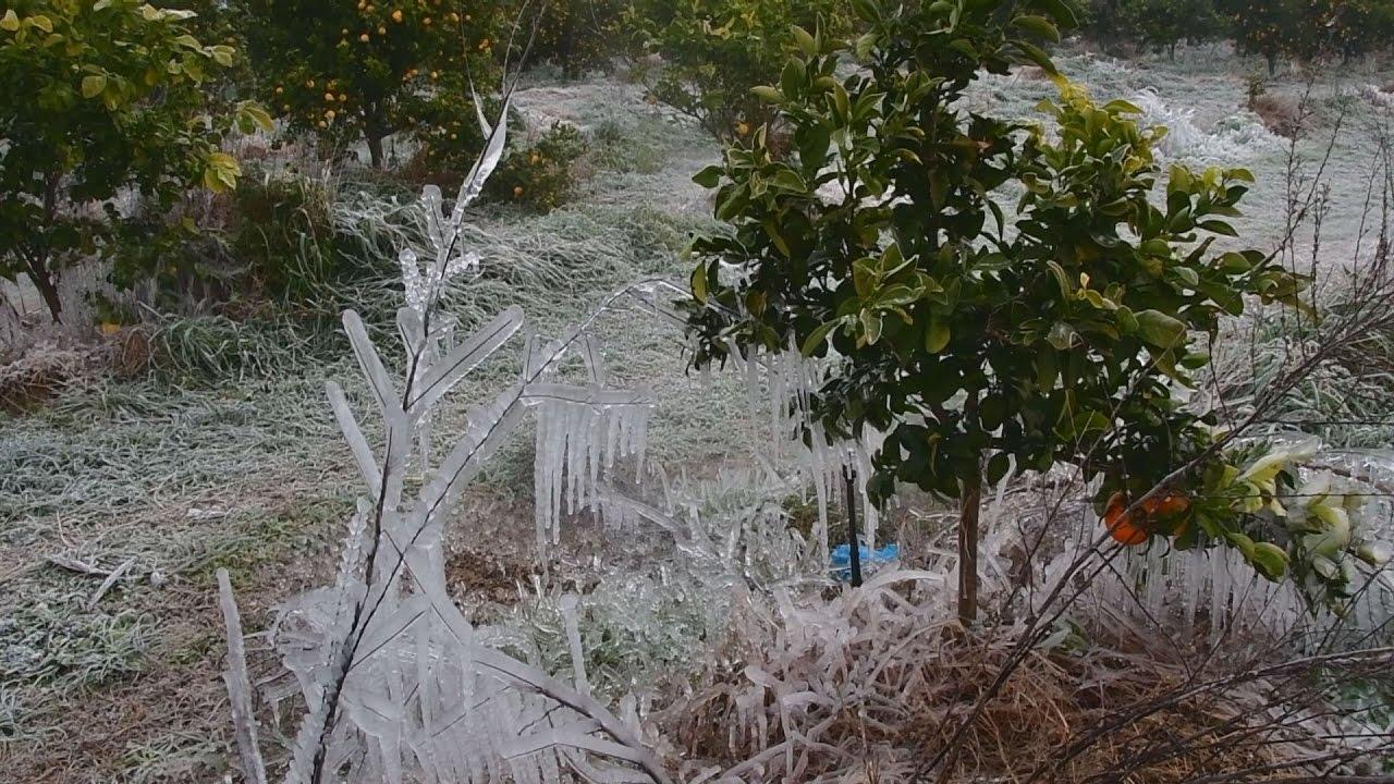 Ολικώς παγετός στην Αργολίδα