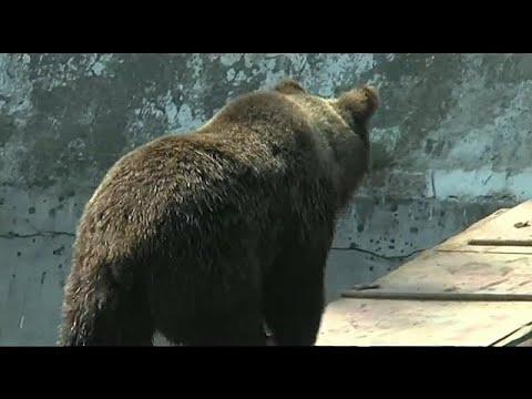 Ρουμανία: Αρκούδες κυκλοφορούν και κάνουν επιθέσεις παρά τον χειμώνα…