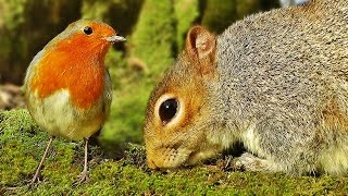 Videos for Cats to Watch : Bird and Squirrel World full download video download mp3 download music download