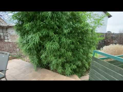Video Prostorný rodinný dům 7+kk se zahradou, terasou a bazénem, Praha 8 - Kobylisy