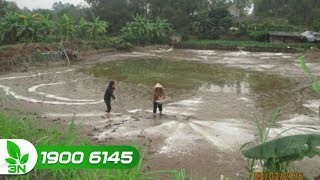 Thủy sản | Tác dụng của vôi với ao nuôi cá