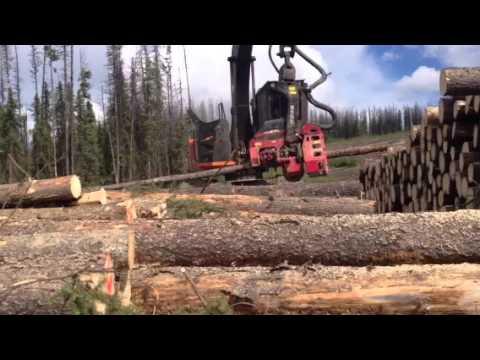 Waratah processor (видео)