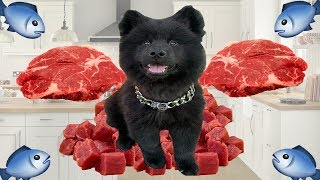 Puppy Tries RAW MEAT! (And Raw Dog Food Q&A) by Emzotic