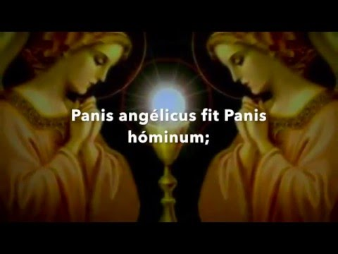 Panis Angelicus - con letra