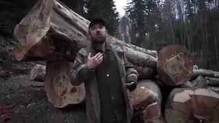 Rząd pozwala na masową wycinkę drzew w Bieszczadach i transport statkami do Szwecji!!!