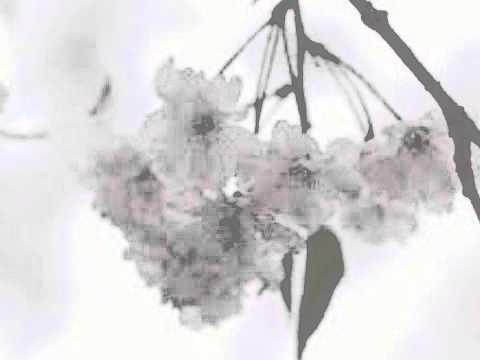 惜別の歌 尺八:櫻井正隆 Shakuhachi:Masataka Sakurai
