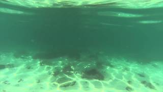 Bamboo Island Phi Phi Islands Phuket Thailand - Fish And Underwater