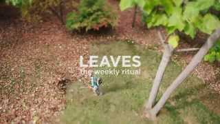 2015 Leaves Timelapse - Boss