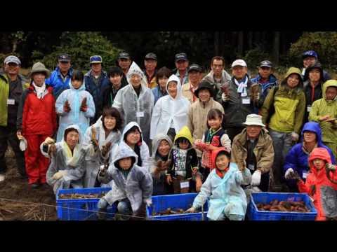 サツマイモ収穫体験/特産氷見市速川地区