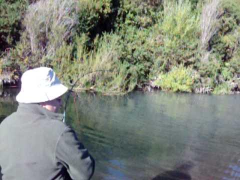 Salmón Chinook pescado por mi padre - Río Allipén, IX Región, Chile.