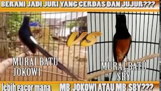 Video Murai Batu Jokowi VS Murai Batu SBY, Lebih Gacor Mana??? [ nama burung hanya pemanis saja] MP3, 3GP, MP4, WEBM, AVI, FLV Maret 2018