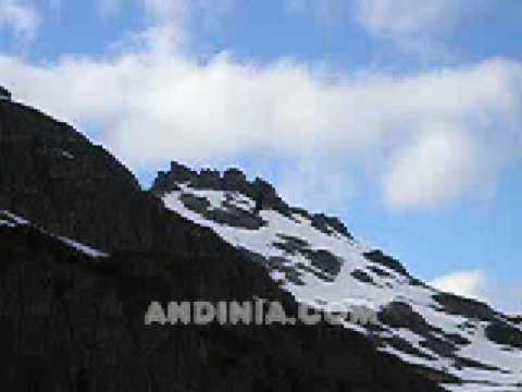 Un cóndor andino en vuelo - An Andean condor in flight - O condor andino em voo