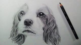 Drawing a Dog (Puppy) - Time Lapse
