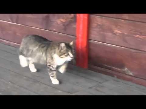 guardate questo gatto cosa crede di essere!