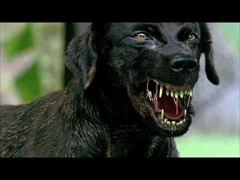 ตัวอย่าง ว้อ..หมาบ้ามหาสนุก (Official Trailer)