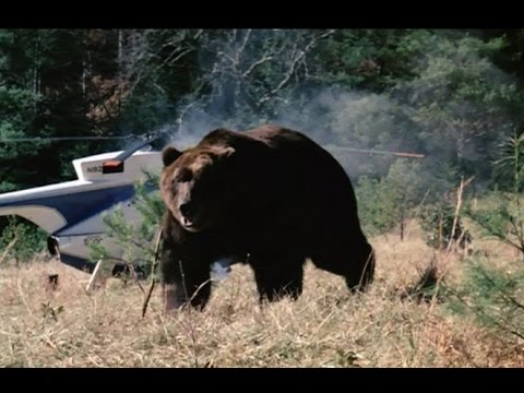 Grizzly  (1976) HD