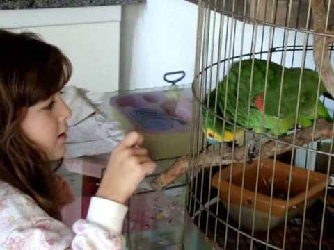 Papagaio cantando hino do Corinthians entre outras coisas