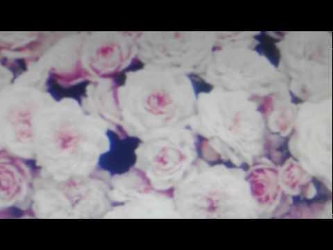 Tekst piosenki Crystal Castles - Mercenary po polsku