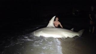 Giant 14ft Hammerhead Shark Caught Off The Beach :o