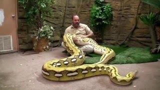 Video Grandes Serpientes de Jay Brewer /  La Ceja Virtual MP3, 3GP, MP4, WEBM, AVI, FLV Desember 2018