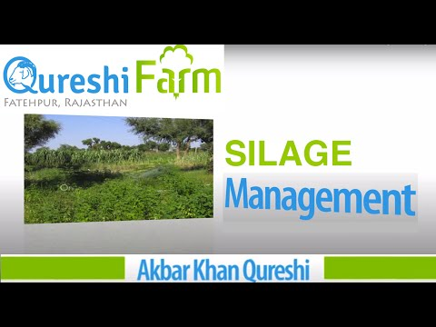 rajasthan goat farming - Qureshi Farm, Fatehpur Sikar, Rajasthan India (www.qureshifarm.com) shows how to make silage and reduce feed (fodder) cost. Silage is stocking of green fodde...