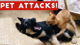 Funniest Animal Attacks Compilation October 2016  Funny Pet V...