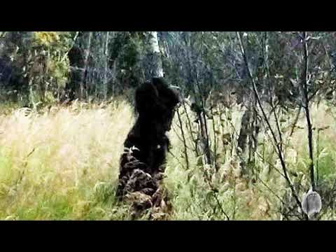 Mysterious Photos of Bigfoot | Mountain Beast Mysteries | Episode 60 (видео)